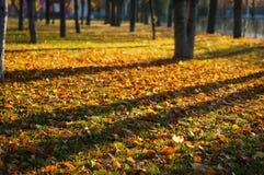 Césped del otoño imagen de archivo libre de regalías