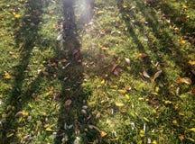 Césped del otoño Imagen de archivo