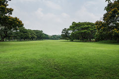 Césped del paisaje con los árboles Foto de archivo