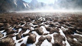 Césped del parque nacional de Yosemite debajo de la nieve almacen de video