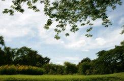 Césped en jardín Imagen de archivo libre de regalías
