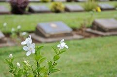 Césped en un cementerio con las lápidas mortuorias Fotografía de archivo