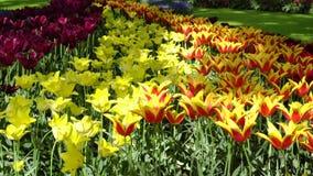 Césped fresco con las flores almacen de video