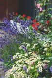 Césped hermoso con diversos colores y césped en un día soleado landscaping La composición de pequeñas flores fotos de archivo