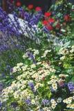 Césped hermoso con diversos colores y césped en un día soleado landscaping La composición de pequeñas flores imagen de archivo libre de regalías