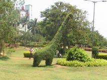 Césped hermoso del jardín público con la jirafa hecha en árbol y el arbusto que parece muy hermoso Imágenes de archivo libres de regalías