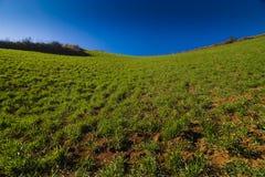 Césped-hierba Fotografía de archivo libre de regalías