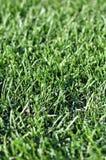 Césped joven fresco de la hierba verde en el día del otoño de la primavera en la salida del sol Imagenes de archivo