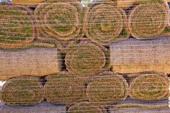 Césped natural del césped de la hierba en los rollos apilados Fotos de archivo libres de regalías