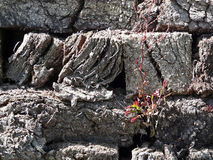 Césped secado con la vegetación joven Fotos de archivo libres de regalías
