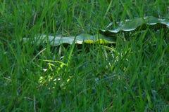 Césped verde Imagen de archivo libre de regalías