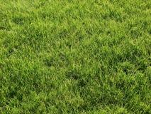 Césped verde Fotografía de archivo