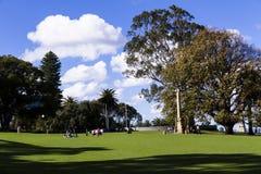 Césped verde con la hilera de árboles Imagen de archivo libre de regalías