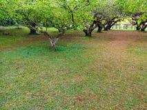 Césped verde con la rama de árbol fotografía de archivo