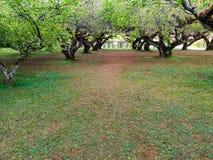 Césped verde con la rama de árbol foto de archivo libre de regalías