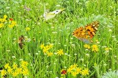 Césped verde con las flores y los insectos de la primavera Foto de archivo