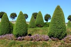 Césped verde con los árboles Foto de archivo libre de regalías