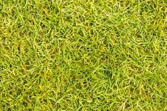 Césped verde de los campos de golf Foto de archivo libre de regalías