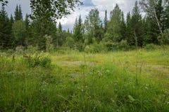 Césped verde en un bosque mezclado, en el verano Fotos de archivo libres de regalías