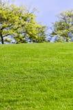 Césped y árbol verdes fotos de archivo libres de regalías