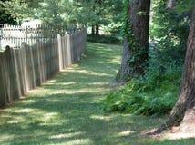Césped y árboles herbosos pacíficos con el sol Fotos de archivo libres de regalías