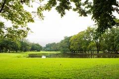 Césped y árboles verdes foto de archivo