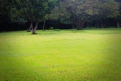 Césped y árboles verdes claros hermosos Fotos de archivo