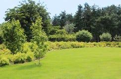 Césped y arbustos hermosos en jardín del verano Fotos de archivo