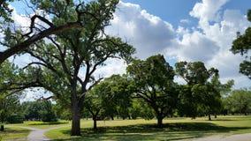 Céu aberto com árvores Imagens de Stock