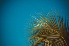 Céu acima da árvore de coco na floresta Fotografia de Stock Royalty Free