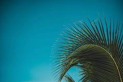Céu acima da árvore de coco na floresta Imagens de Stock