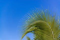Céu acima da árvore de coco na floresta Fotos de Stock