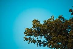 Céu acima da árvore na floresta Imagens de Stock Royalty Free