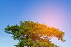 Céu acima da árvore na floresta Fotos de Stock Royalty Free