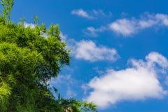 Céu acima das árvores de bambu na floresta Foto de Stock