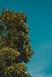 Céu acima das árvores de bambu na floresta Fotografia de Stock