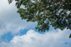 Céu acima das árvores na floresta Fotos de Stock Royalty Free