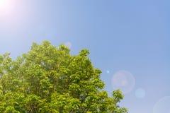 Céu acima das árvores na floresta Imagem de Stock Royalty Free