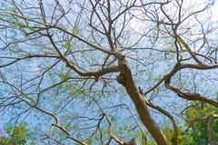 Céu acima das árvores na floresta Foto de Stock