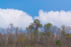 Céu acima das árvores na floresta Imagens de Stock