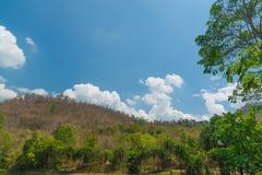 Céu acima das árvores na floresta Fotografia de Stock Royalty Free