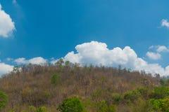 Céu acima das árvores na floresta Fotos de Stock