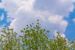 Céu acima das árvores na floresta Imagens de Stock Royalty Free