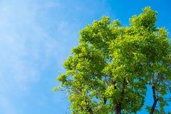 Céu acima das árvores na floresta Fotografia de Stock