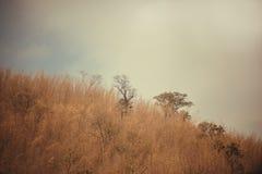 Céu acima das árvores na floresta com fundo da montanha Imagens de Stock