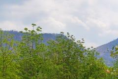 Céu acima das árvores na floresta com fundo da montanha Foto de Stock Royalty Free