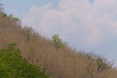 Céu acima das árvores na floresta com fundo da montanha Foto de Stock