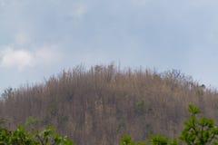 Céu acima das árvores na floresta com fundo da montanha Fotografia de Stock