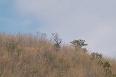 Céu acima das árvores na floresta com fundo da montanha Fotos de Stock Royalty Free