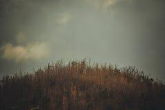 Céu acima das árvores na floresta com fundo da montanha em vi Fotografia de Stock Royalty Free